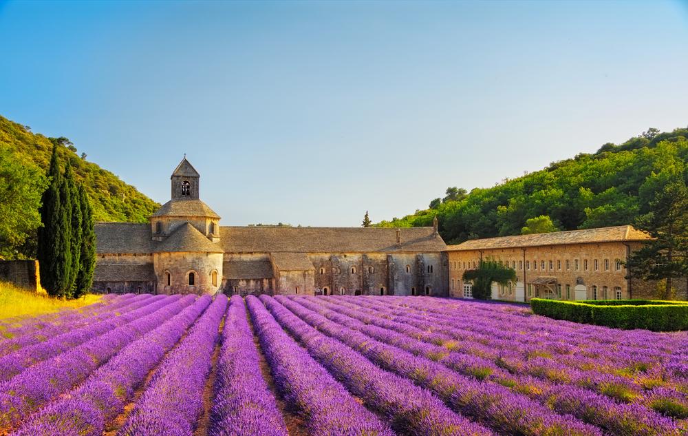 Bu Yaz Lavanta Tarlaları Arasında: Provence