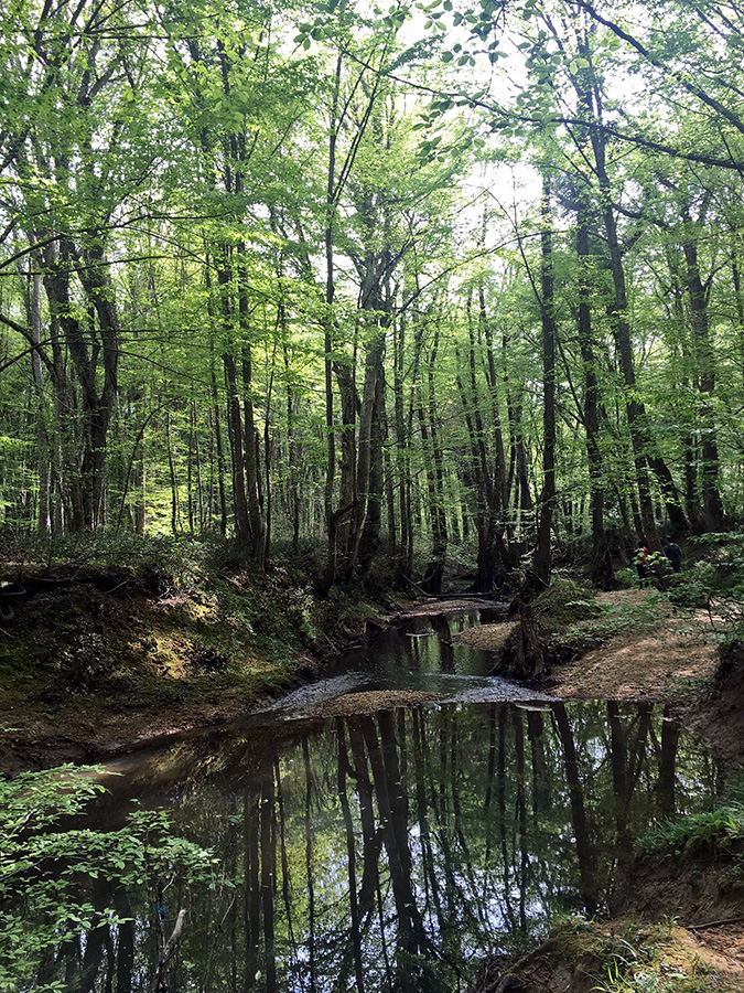 İğneada Longoz Ormanları: Mucizevi Ekosistem