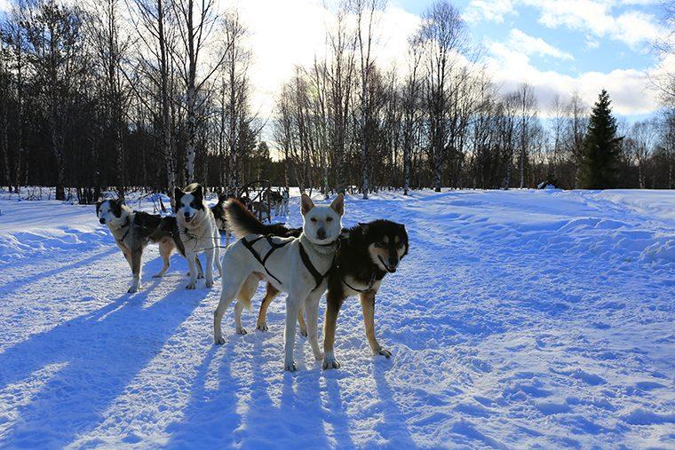 Laponya: Kuzey Işıklarının Ötesinde Bir Deneyim