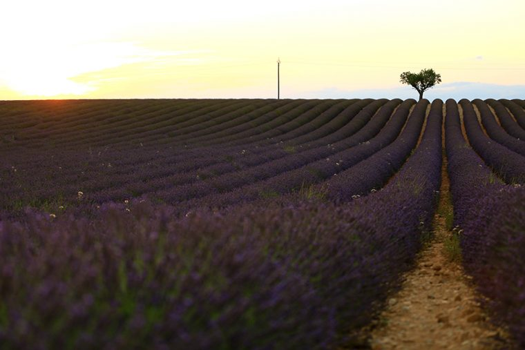 Yurtdışında Gezilecek Yerler - Provence