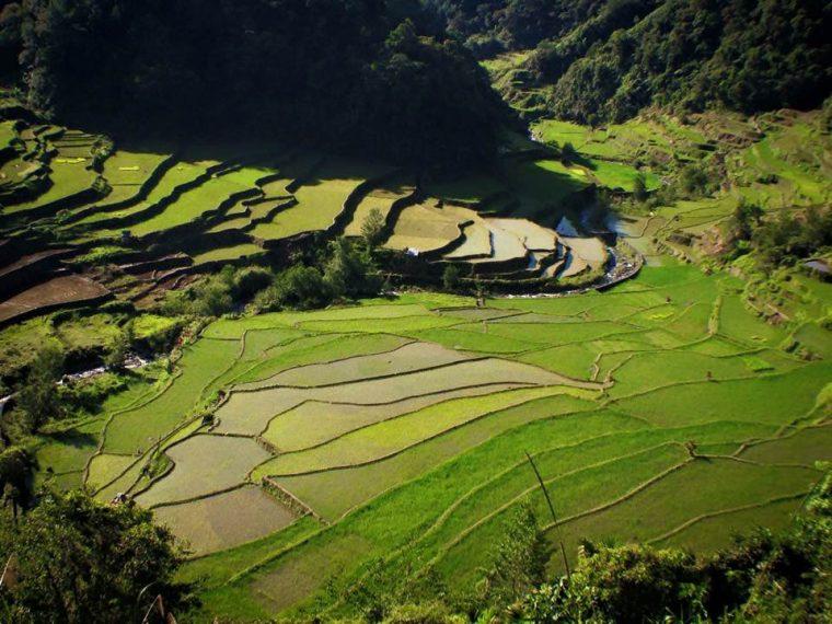 Filipinler'de Yemyeşil Bir Hikaye:Banaue ve Batad
