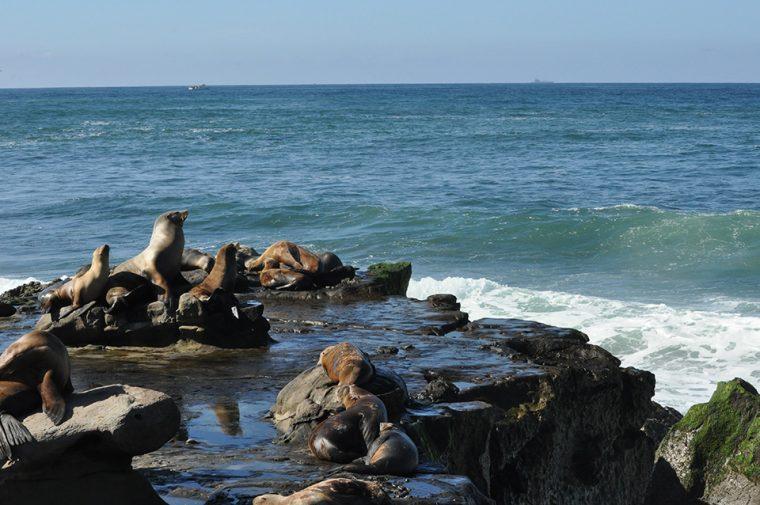 San Diego: Amerika'nın En Yaşanılası Şehri - La Jolla