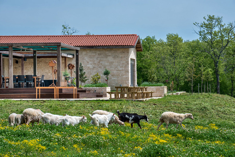 istanbula Yakın Gezilecek Yerler | Palivor Çiftliği