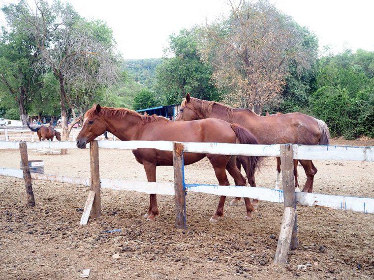 Kaş Tatil Rehberi | Kaş At Çiftliği