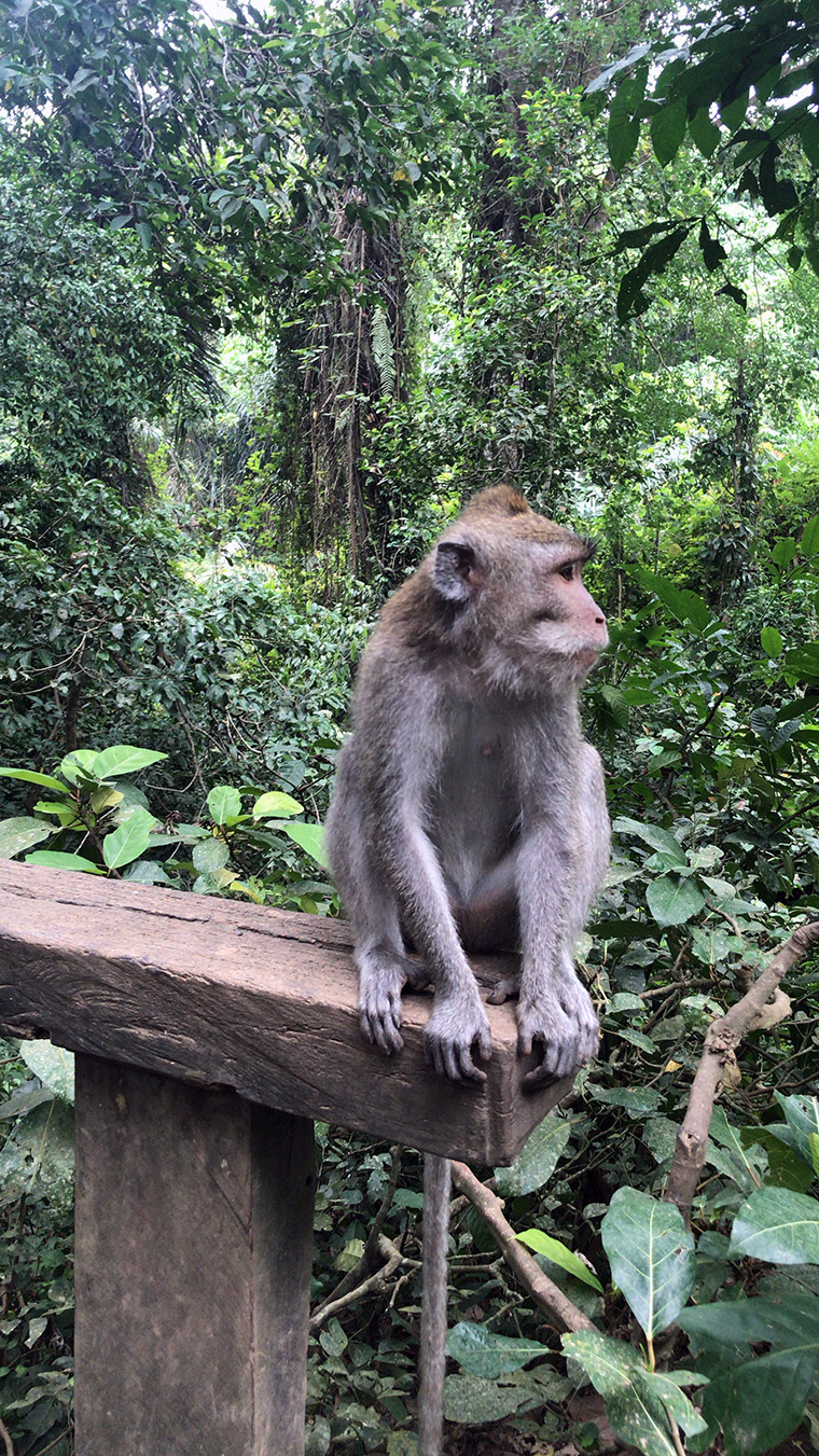 Bali Adası - Sacred Monkey Forest Sanctuary