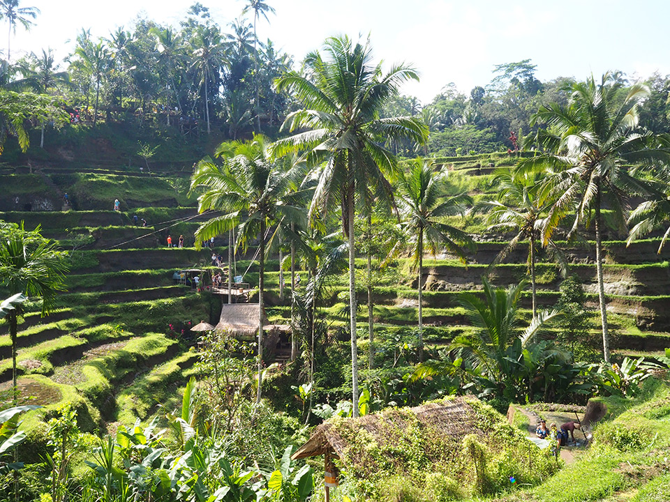 Lordların adası Bali'nin, cennet diyar bölgesi Ubud