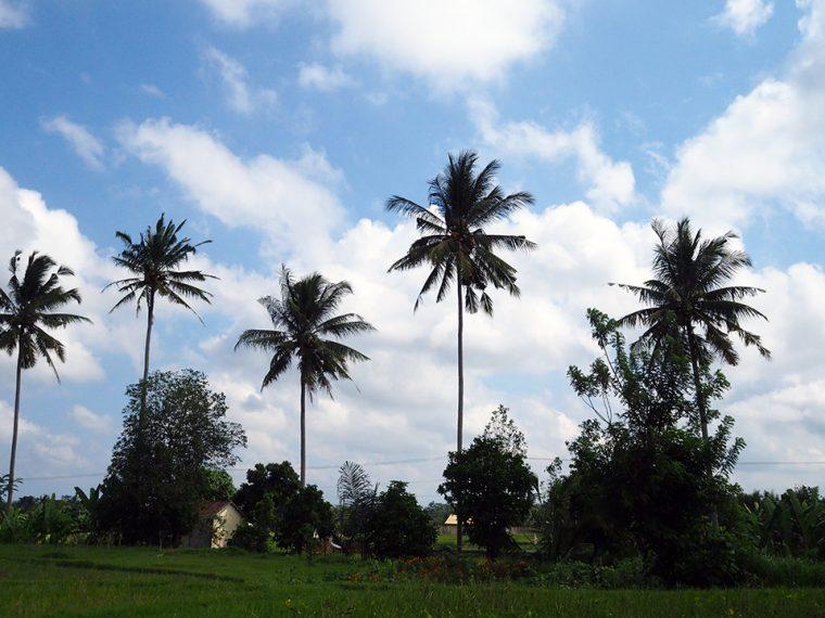 Bali Adası - Ubud Turları