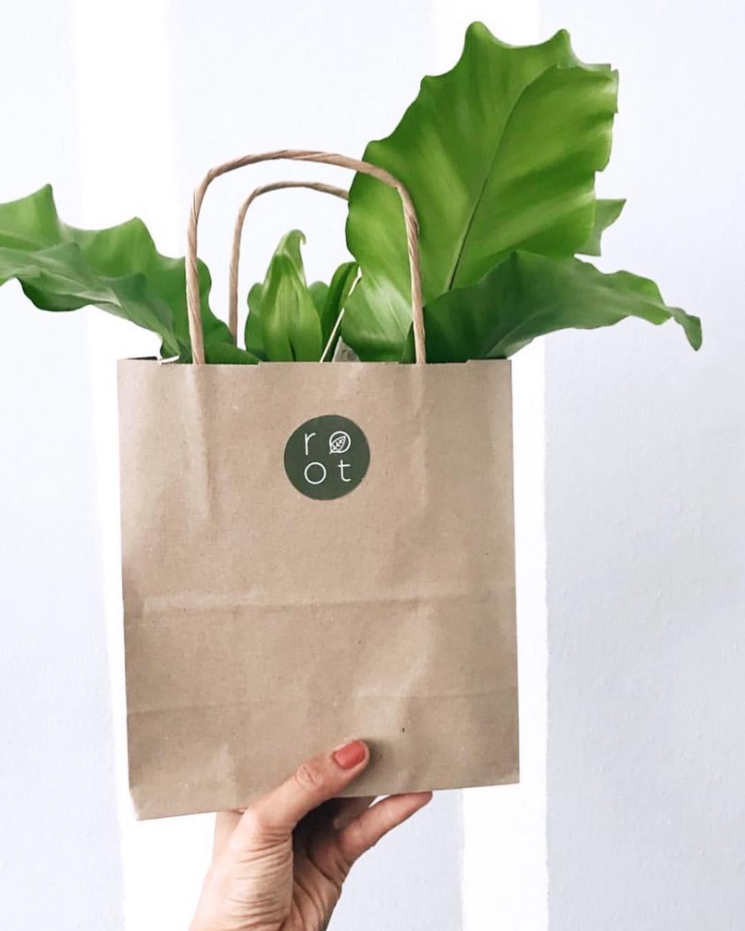 Root Botanical Design