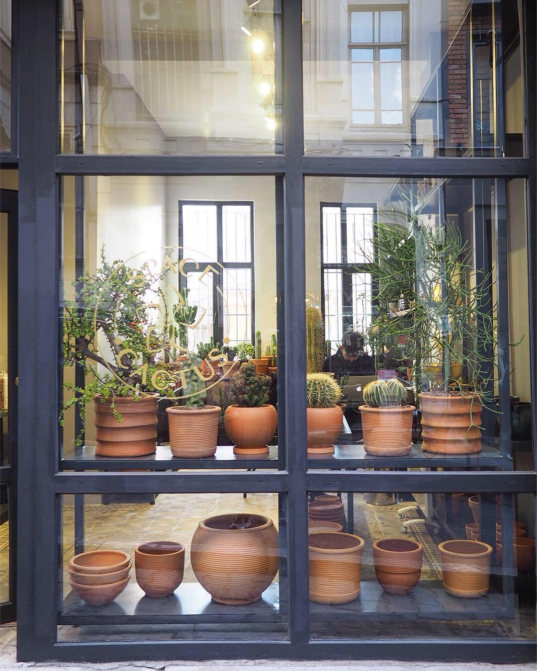 İstanbul'un Yaratıcı Çiçek Dükkanları ve Botanik Kafeleri | Space Cactus