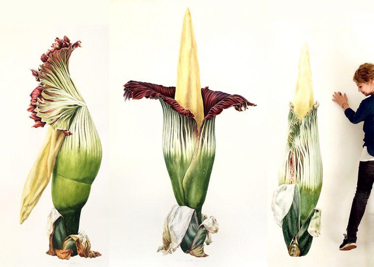 Bitki Ressamı Işık Güner